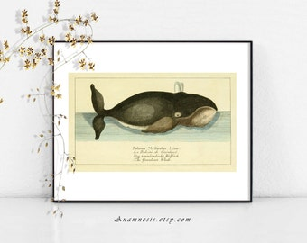 GREENLAND WHALE -3 in set of 4 - digital download - printable ocean illustration retooled by Anamnesis - image transfer - totes, pillows