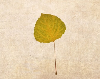 Rustic Fall Photography, Autumn Leaf, Wall Art, Home Decor, Square, Horizontal or Vertical Print | 'Green To Yellow'