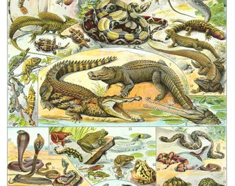 1936 Vintage Reptile poster VIntage Snake art Reptile print Snake art Turtle art Reptile decor Snake gift French dictionary page classroom