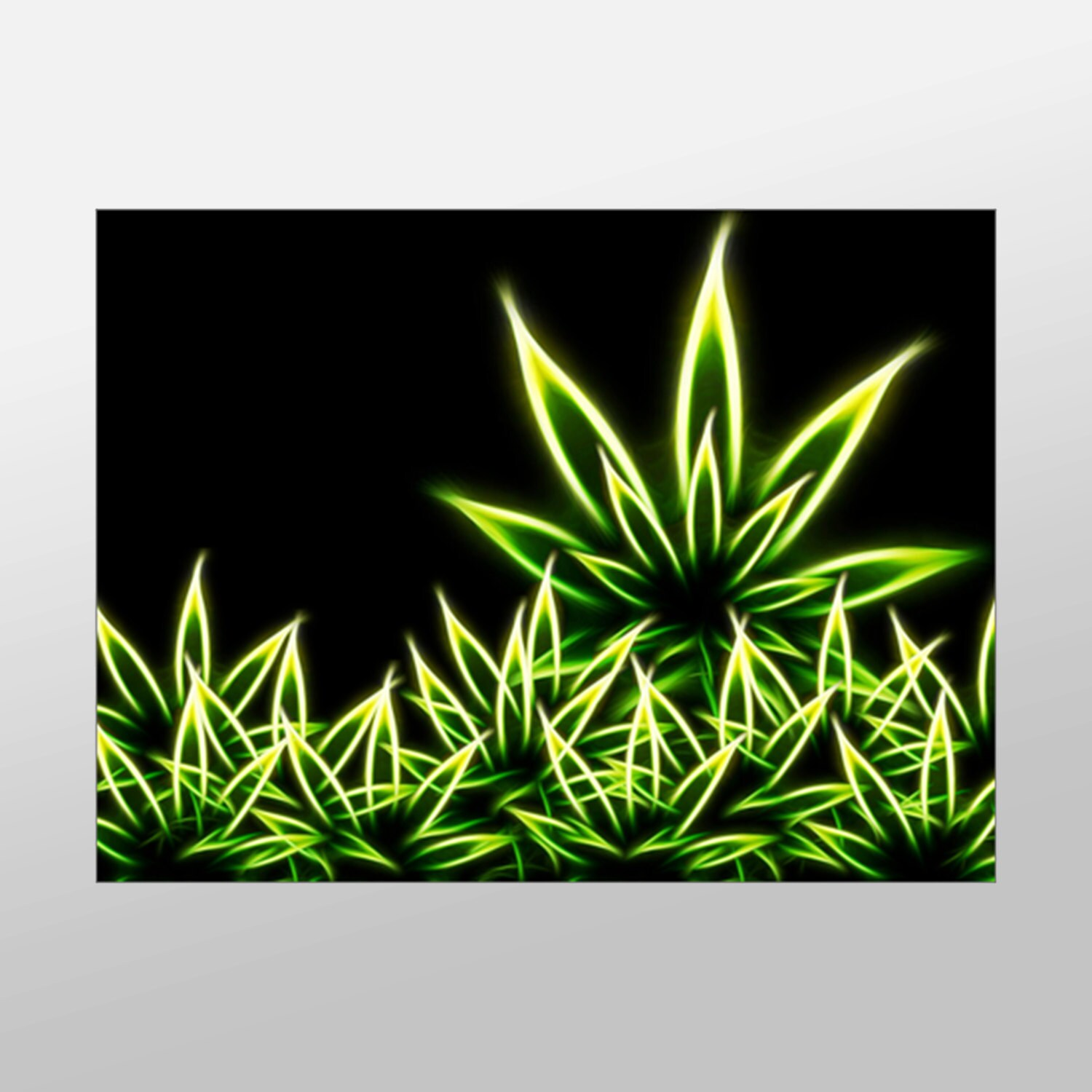Cannabis Paintings