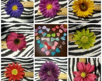 Fab Floral Spider Gerber Daisy Flower 2.5 inch Hair Bow on Lined Alligator Clip