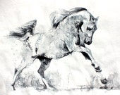 Original Watercolor Painting - Freedom. Drawing of a a wild white horse.