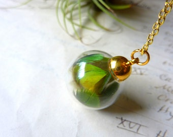 Feather Terrarium Necklace - Glass Orb Pendant - Zoological Specimen
