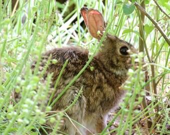 Rabbit Photograph - Wild Life - Spring Rabbit - Cute Animal - Nursery Wall Art - Kid's Room Decor - Curious  Rabbit -Animal Photograph