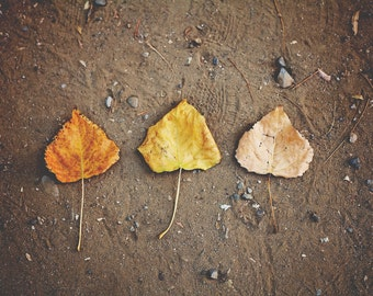 Leaves of Change, Nature Photography, Autumn Wall Decor, Fall Leaves, Rustic Decor