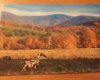 Vintage Original mount greylock mass Postcard Free Shipping