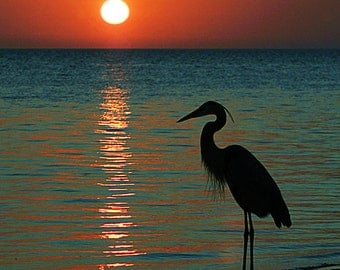 Newport, California - Heron and Sunset (Art Prints available in multiple sizes)