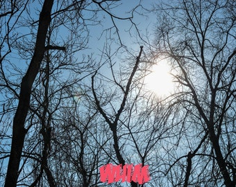 Nature. Trees. Photography.