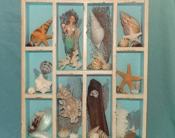 Sea Shell Collection in Printer's type Tray.