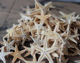 50pc Philippine Flat Starfish Starfish - Craft Starfish - Wholesale - Beach Decor - Small Starfish - Jewelry Supply - Craft Supply
