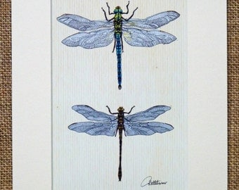 Dragonfly Print Dragonfly Picture Dragonfly Artwork Dragonfly Illustration - Emperor & Golden Ringed Dragonflies, a very popular choice
