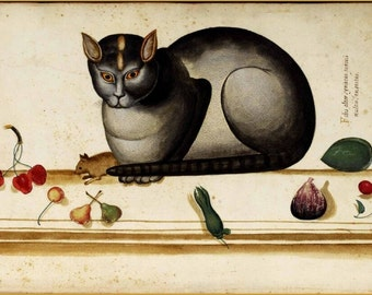 """Animal-Cat-Italian- Cat on ledge with mouse and fruit. 11 X 14""""  canvas art print"""