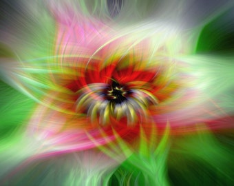 """Abstract Flower Art Titled: """"Pictures of Lily""""  psychedelic, colorful fractal photomanipulation, 8x10 signed limited edition Fine Art Print"""