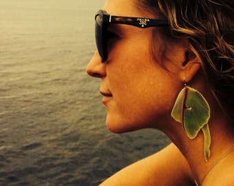 PEI Earrings: Real Prince Edward Island Luna moth wings!