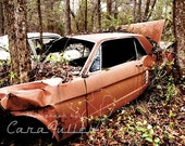 1966 Ford Mustang with a tree growing where the motor should be Photograph