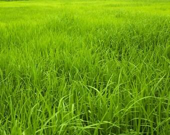 Grass Photography Backdrop,Lawn Backdrop D5854