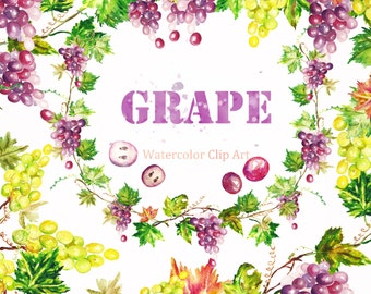 Grape watercolor clipart. Digital Watercolours clipart hand drawn. SET Grape. Autumn wedding wine fruits for cards, invitations, grape leavs