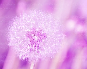 Dreamy Dandelion Print {Purple Lavender Large Flower Artwork Wall Art Canvas Picture Photo Photograph Baby Baby's Girl's Nursery Decor}