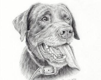 Dog Portrait-Dog drawing-Custom Pet Portrait-pencil drawing pet-Chocolate Lab -labrador retriever-Dog illustration-pet sympathy-dog art