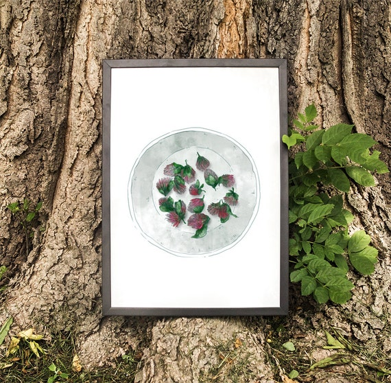 Kitchen Herbarium Art: Red Clover Flowers Trifolium Pratense Herb Herbarium By RNDMS