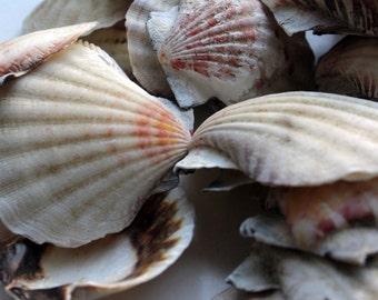 Raw craft shells / craft shells