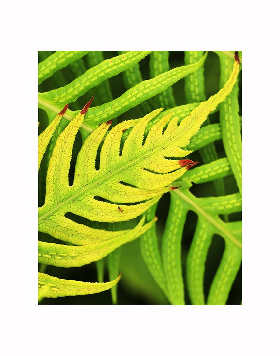 Fern Photography, Fern Spores, Fern Fronds, Fine Art Photography, Botanical Photograph, Nature Photography, Macro Photography, Home Decor