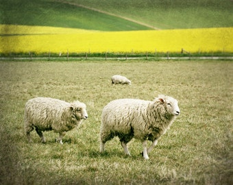 English Countryside Photography, Sheep Photo, Landscape, Britain, Animal Photo, Spring, Fine Art Print, green, yellow, Home Decor, Wall Art