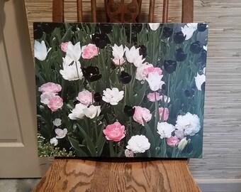 "Tulips from the Sunken Garden, Lincoln, Nebraska, Flowers, Garden, Canvas Art, 20""x16"",  FREE SHIPPING!"