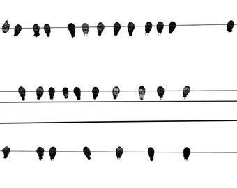 35 Birds
