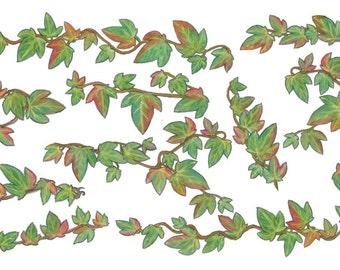 Irish Ivy Art Decal/Stickers/Wall Transfers in Autumn Colours FREE SHIPPING
