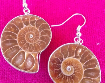Fossil Ammonite Earrings - Healing Jewelry