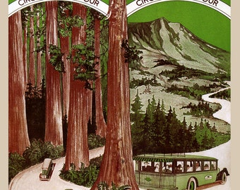 California Muir Woods Mt Tamalpais National Park California Redwood Vintage Poster Repro FREE SHIPPING