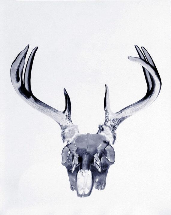 Ciervos del cráneo inversa bellas artes por CSidePhotography