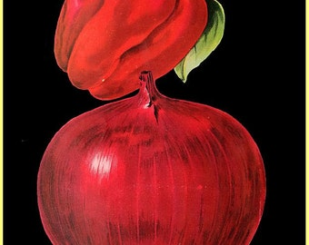 antique victorian vegetables illustration juicy red pepper and red onion print on black background digital download