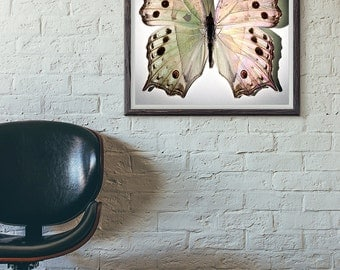 Butterfly Art Print, Modern Nursery Decor, Nature Photography, Spring Decor, Butterfly Wall Decor, Girls Room,  Natural History