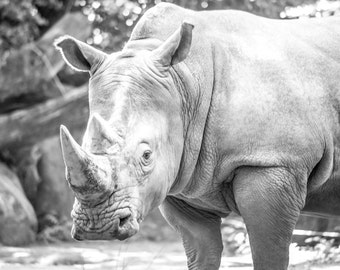Black Rhinoceros Photography Print