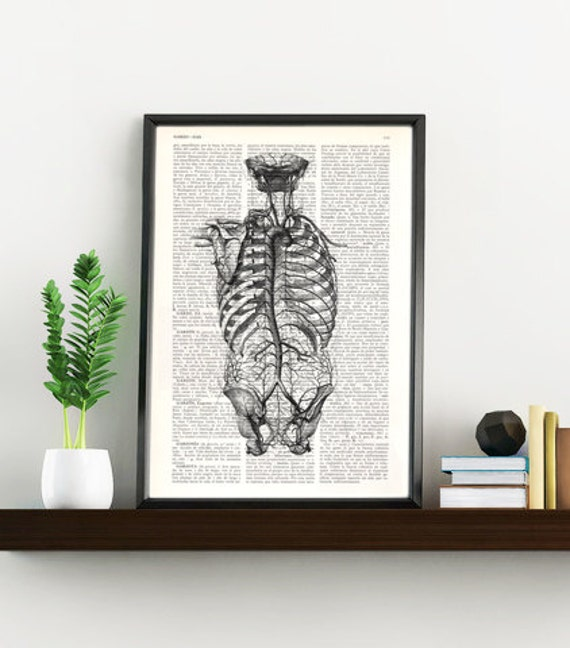 Summer Sale Human back anatomy Art Print -Anatomical art, giclee print SKA105