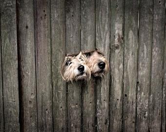Castle Guards, Dog Print, Jack Russell, Digital Print, Cute Dog, Adorable Dogs, Dog Wall Decor, Nursery Art, Funny Animal, Puppy Print