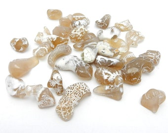 5 Snakeskin Agate Stone Great for Wire Wrapping - Collecting - Chakra - Tumbled Stone  (RK37B8-01)