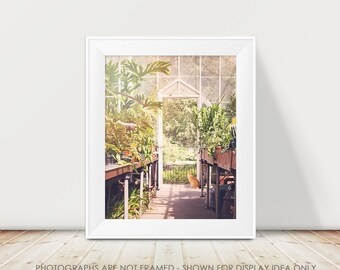 Cat Photography, Cat in Greenhouse, Nature Photograph, Cat Portrait, Dreamy Pastel, Architecture, Garden, Modern Cat Art, Animal Photograph