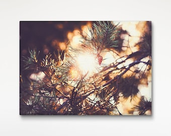 Nature Canvas Print, Pine Trees, Photo Canvas, Wall Decoration, Wall Art