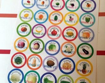 Pregnancy Weekly Size Stickers - Erin Condren Planner
