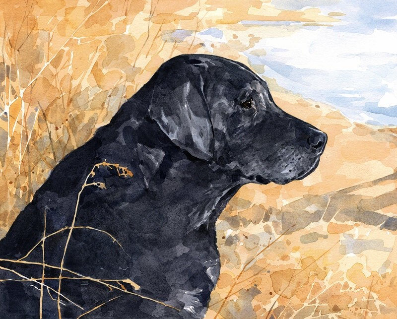 Black Lab Watercolor Limited Edition Print 8x10 Labrador