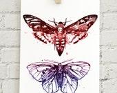 "Moth Specimen: 5x7"" print"