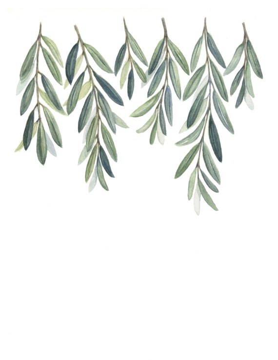 Olive Branches Art Print Olive Branch Leaves Painting