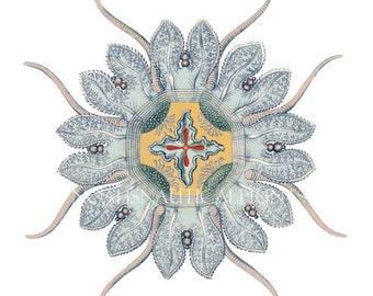 Ernst Haeckel - Sea Urchin Coastal Decor Fantasy Sea Life Giclee Art Print. Blue Ocean Sealife Print for Coral Bathroom Decor. Beach style
