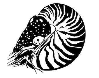 Nautilus vinyl decal