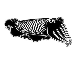 Cuttlefish vinyl decal