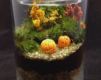 Halloween Terrarium Fall Pumpkin Moss Terrarium