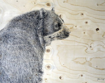Andean Bear. Good quality art print. A3 size.